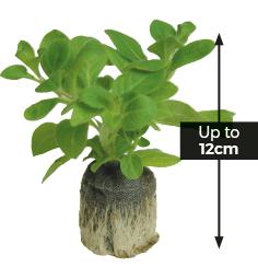 Super Plug Plants