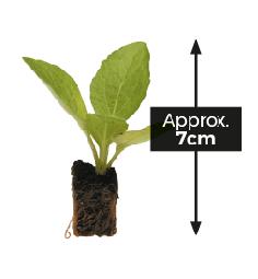 Value Plug Plants